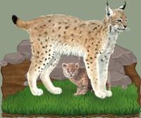 Montagnard expert de la faune